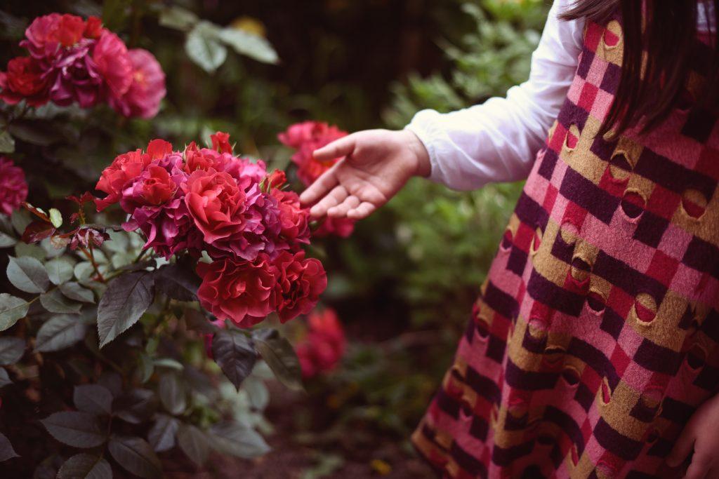 Розите на Петьо